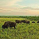 The Herd by Benjamin Sloma