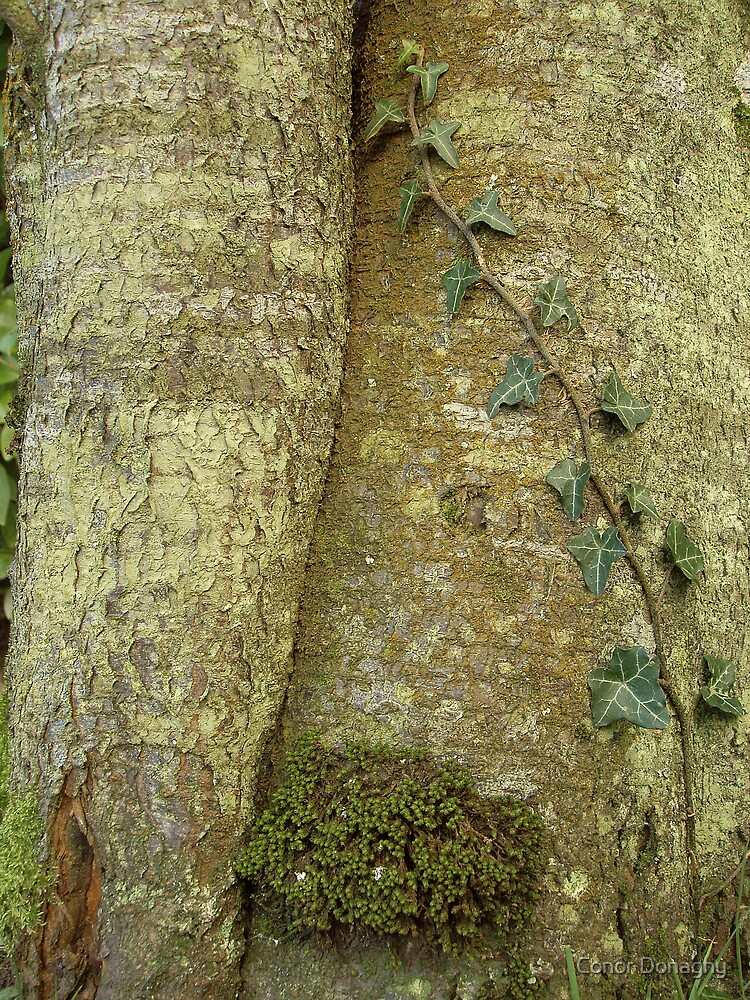 Textured tree trunk with Ivy by Conor Donaghy
