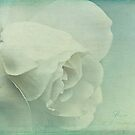 l'eau de rose by lucyliu