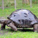 Tuck The Tortoise by Jessica Hooper