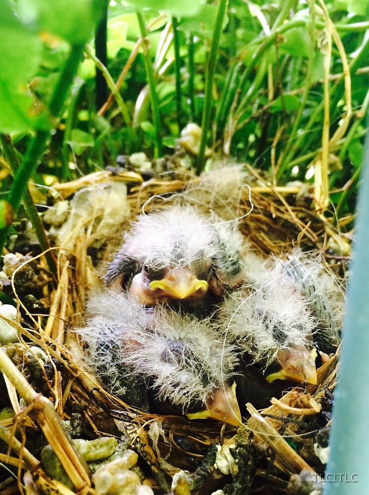 baby birds in a fern by TLC1TLC