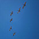 Pelicans Over Pismo Beach Pier by Renee D. Miranda