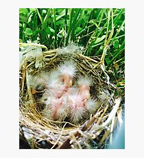hatched Photographic Print