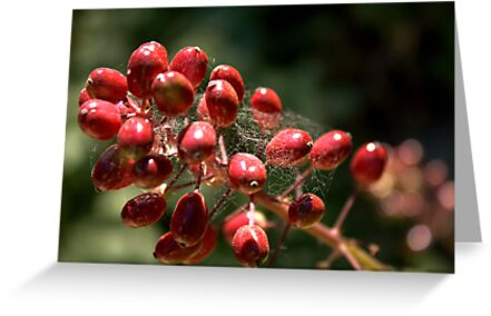 Berries by Valerie Henry