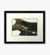 Dragonfly perched Framed Print