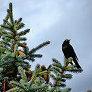 Blackbird by rocamiadesign
