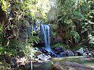 Mt. Tamborine, Curtis Falls by W E NIXON  PHOTOGRAPHY