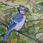BLUE JAY - water colour - sold by Marilyn Grimble