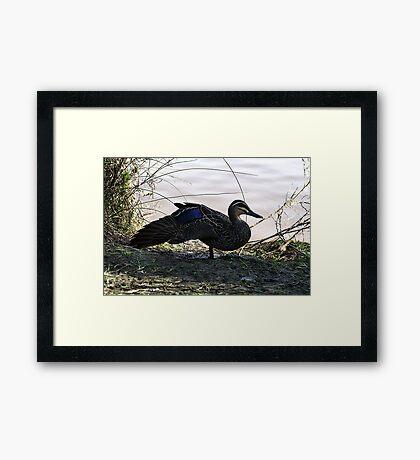 Duck Season Framed Print