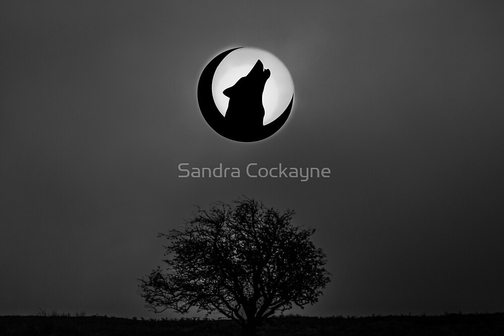 Howling Wolf In The Moon. by Sandra Cockayne