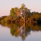 Kakadu 3 by Adrian Lord