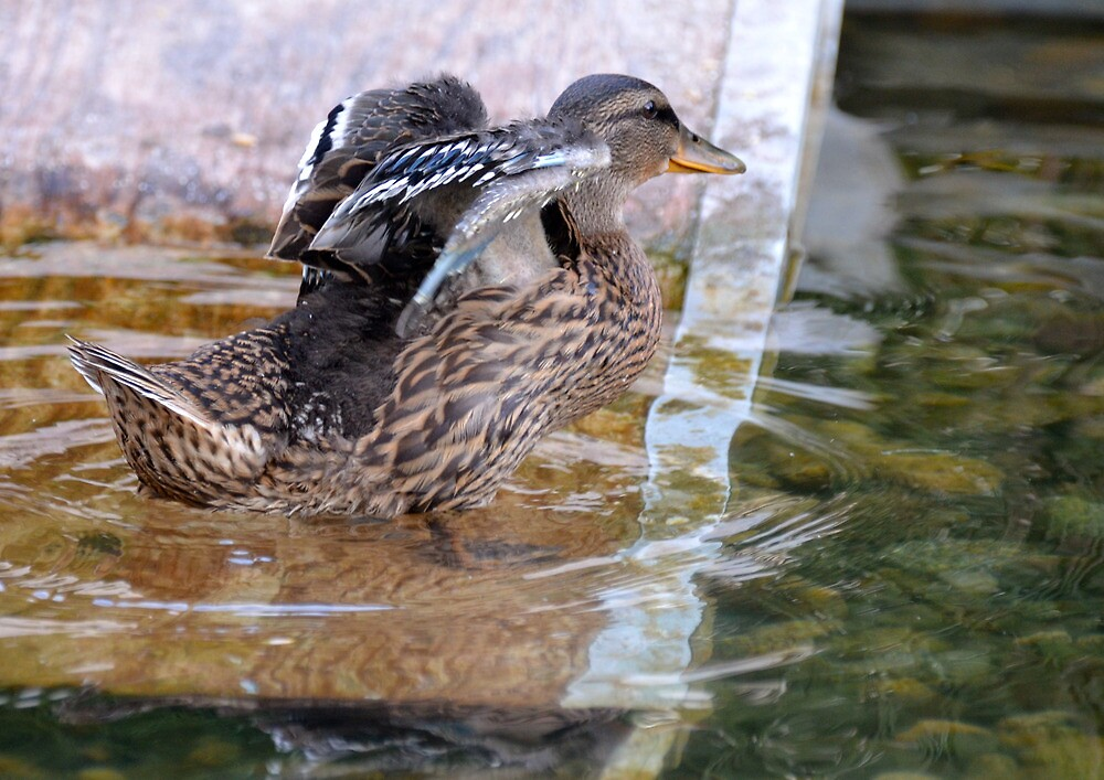 See My New Wings...They're Getting BIGGER! by Carol Clifford