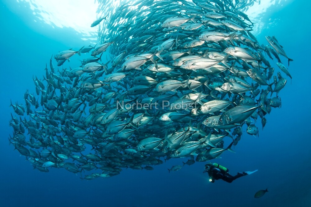 Fish Watch by Norbert Probst