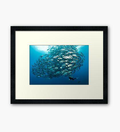Fish Watch Framed Print