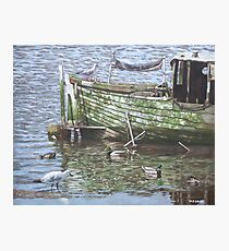 boat wreck with sea birds Photographic Print