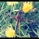 Dragon, Fly by awoni