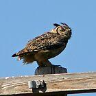 GREAT HORNED OWL by SMOKEYDOGSOCKS
