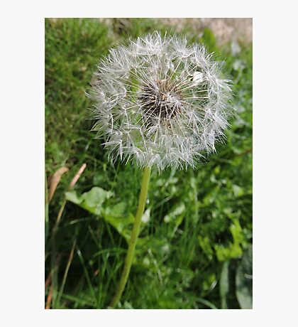 Do You See Weeds Or Wishes?  Photographic Print
