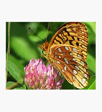 Flutterby on Clover Photographic Print