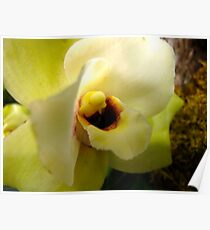 Receptive Orchid Poster