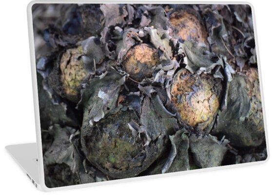"""dinosaur eggs"" by Angel35"