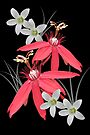 Red and white stars by orko