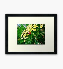 What a Small World Framed Print