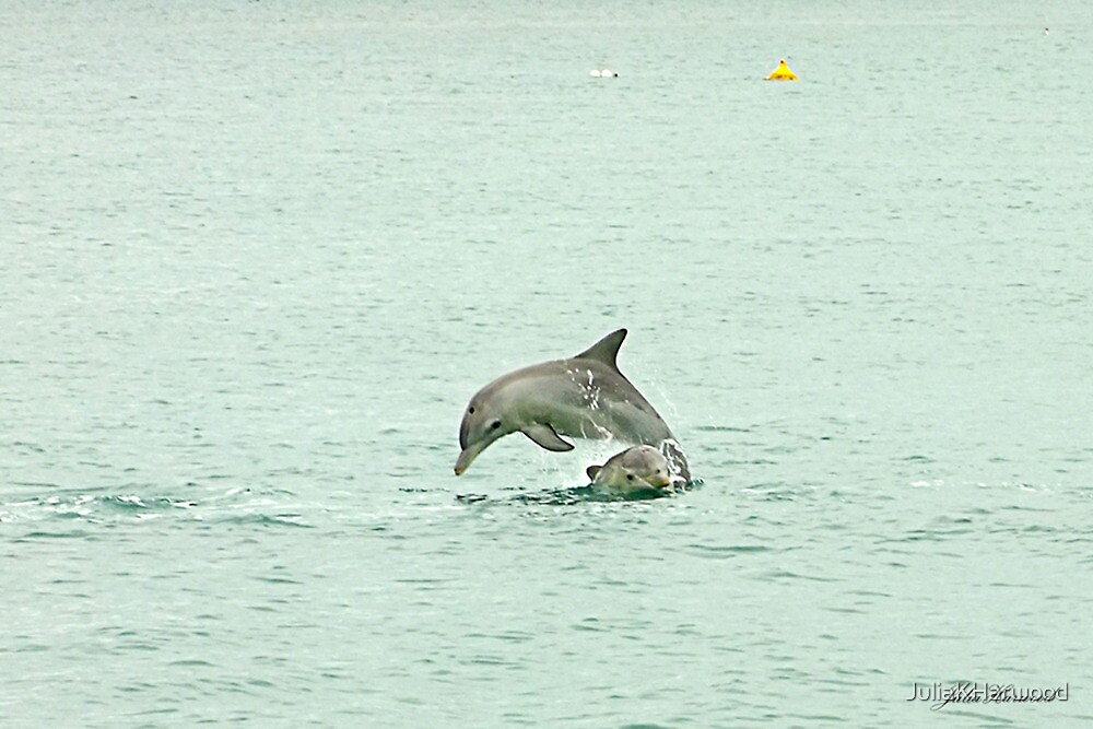 Dolphins playing leap frog by Julia Harwood
