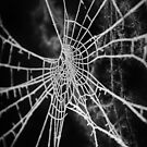 Frosty Winter Web by Astrid Ewing Photography