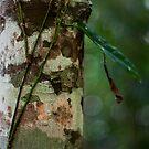 Lichen - Patterns & Colours by Jordan Miscamble