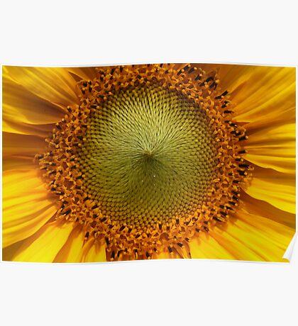 Sunflower Heart Poster