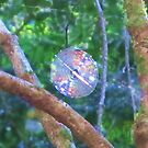 Colourful Cobweb by Michael John