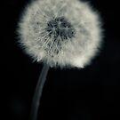 ...simple... by Geoffrey Dunn