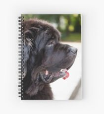 large black Newfoundland dog Spiral Notebook