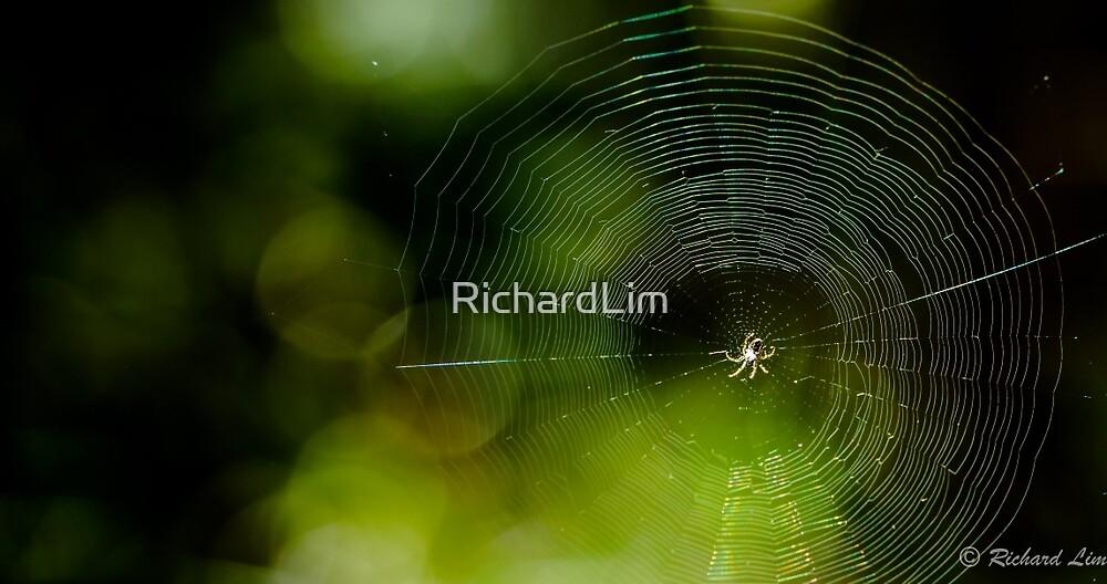Spider web by RichardLim
