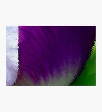 Iris Macro Tricolor Photographic Print