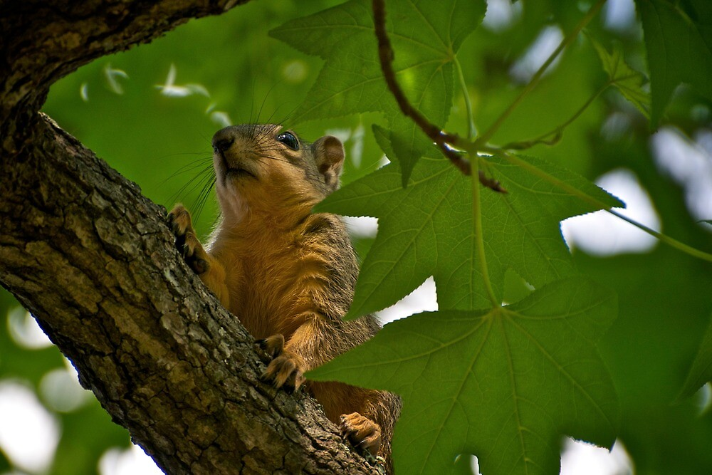 What was that sound below? I've got to check it out! by Ann Reece