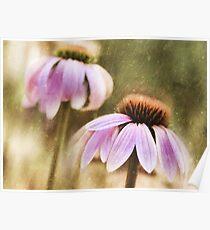 Echinacea Glow Poster