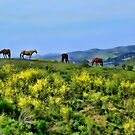 Four Horses Living Free Charity by Renee D. Miranda