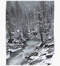 Redwoods Winter Poster
