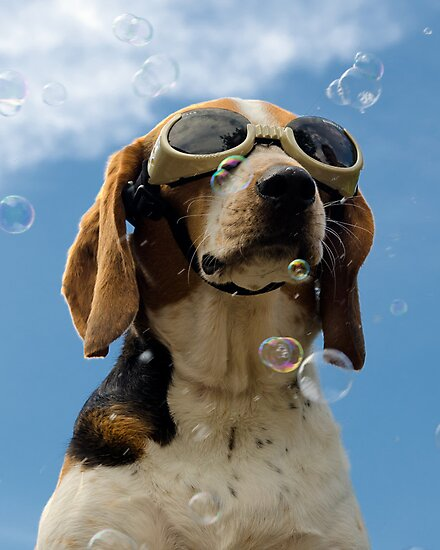Hound amongst the bubbles by Darren Boucher