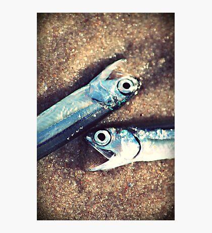 fisherman's feast Photographic Print