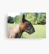 Kenny Bull Terrier Canvas Print