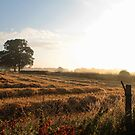 Summer morning in Earl's Croome by LisaRoberts