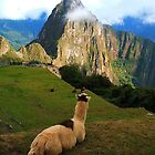 Machu Picchu - Andes by Honor Kyne