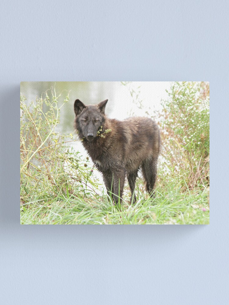 Alternate view of The wolf of the lake Canvas Print