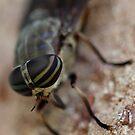 flyster by katpartridge