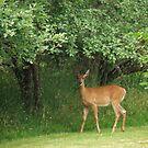 Deer In The Yard by AuntieJ