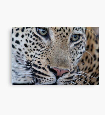 Leopard - Mxabene Male Canvas Print