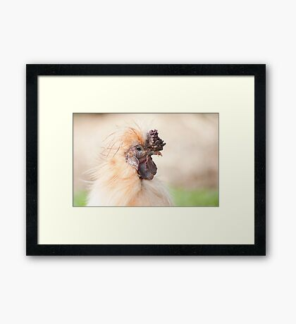 Bad Hair Day - silky rooster Framed Print